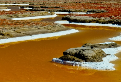 Gallery - South Bay Saltponds