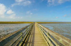 Hayward Shoreline 1